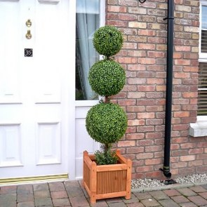 buxus-sempervirens-3-lopte9